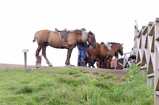 Slavs'ke, Ukraine: Лошадки