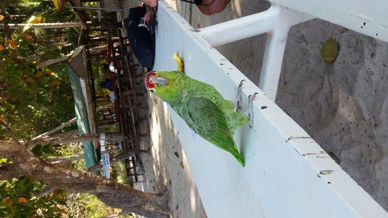 蒙特祖瑪照片
