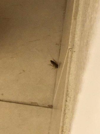 Dunwoody, GA: Roach