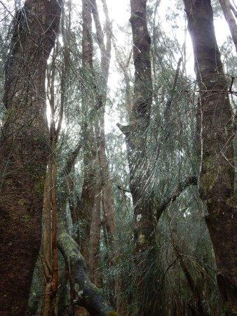 Hoolehua, Hawái: Woodsy walk