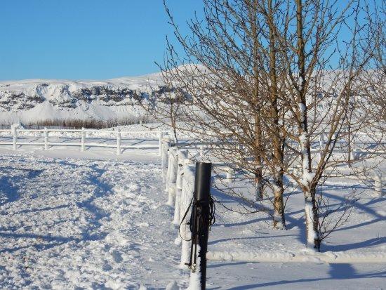 Eld Hestar Horseback Tours: The fields in snow
