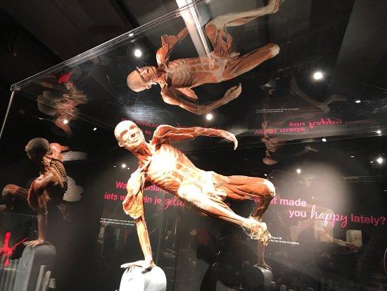 Body Worlds: photo1.jpg
