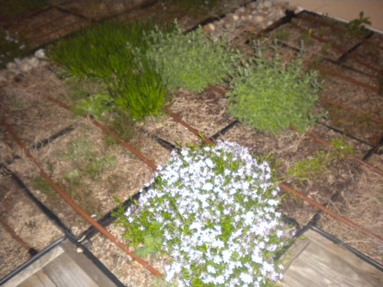 Oxford, MS: Herb Garden on hotel roof dining area