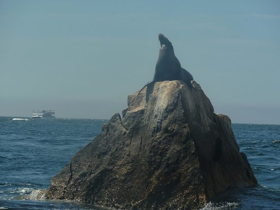 Cabo Expeditions: Sealion