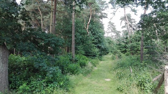 Molbergen, Germany: Example shot of a trail in the neighbouring forest