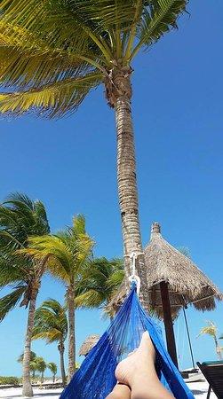 Hotel Villas Delfines: Las hamacas que cuelgan de las palmeras son perfectas para relajarse y la vista al mar es perfec