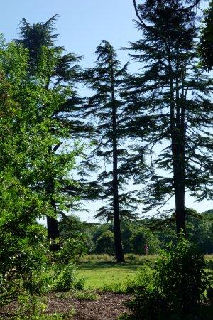 Newport, UK: Tall Trees