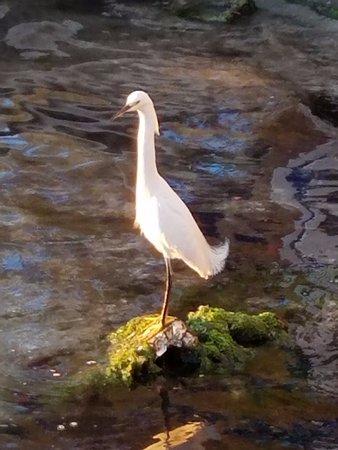 Bradenton Beach, Flórida: Bird looking for dinner
