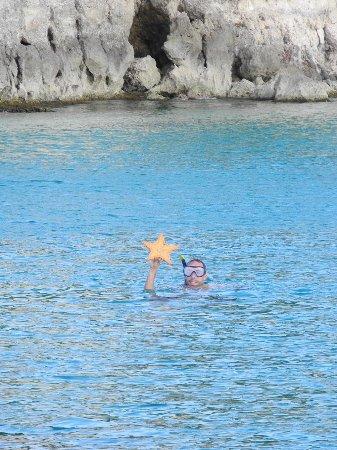 Rêve de Nav' : Etoile de mer