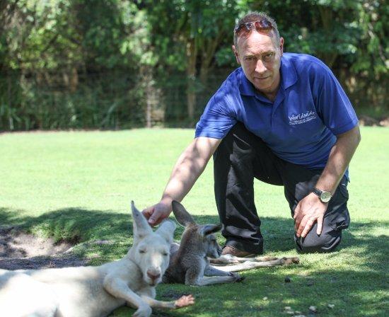 South Perth, Australia: Roos in Perth WA