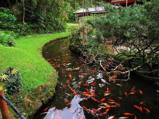 Kaneohe, Havai: Koi