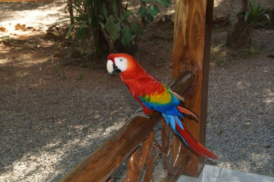 Dominical, Costa Rica: Macaw