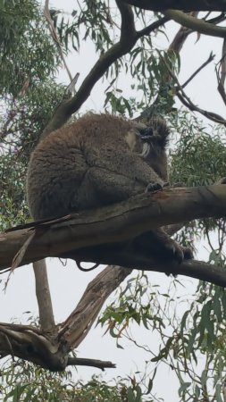 Cowes, Australien: Just napping!