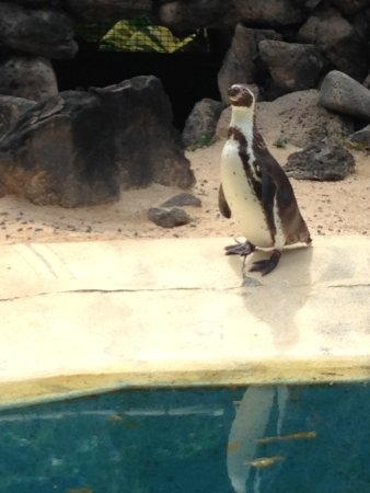 Sea Life Park Hawaii: Penguins!
