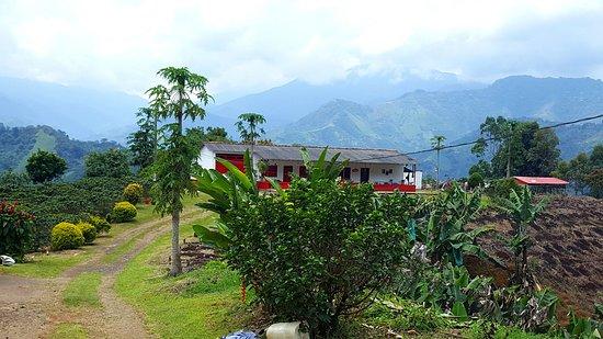 Medellin City Services: Visiting Coffee Farm near Jardin