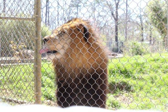 Photo of Zoo Birmingham Zoo at 2630 Cahaba Rd, Mountain Brk, AL 35223, United States