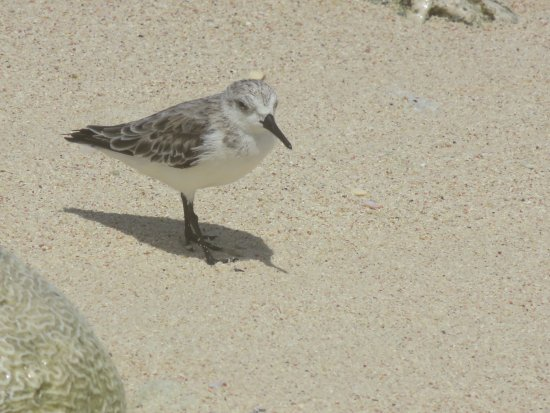 California Dunes: Bird along the north shore