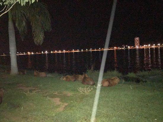 Três Lagoas, MS: photo4.jpg