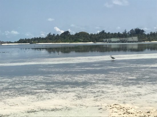 Guraidhoo: photo2.jpg