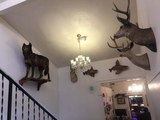 Jackpot, NV: Taxidermy in the foyer