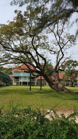 Cha-am, Thailand: another oldest tree at Sakultara Garden (สวนศกุนตลา)