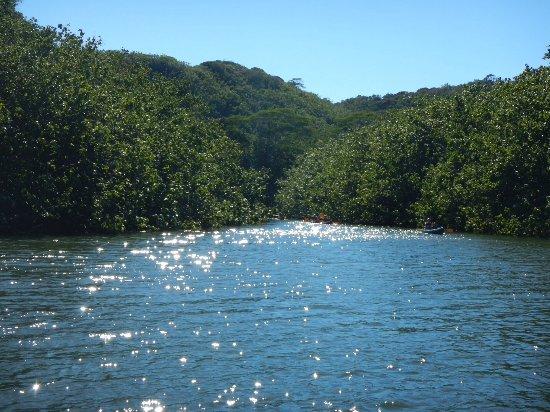 Gray Line - Polynesian Adventure Tours: Wailua River