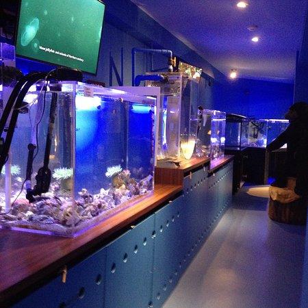 Port Alberni, Canada: Alberni Aquarium and Stewardship Centre