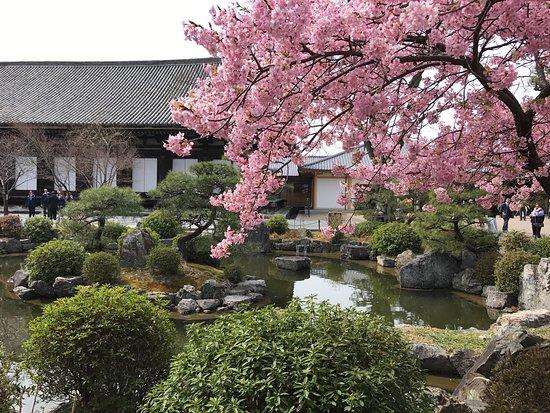 Photo of Historic Site Sanjusangendo Temple at 三十三間堂廻町657, Kyoto 605-0941, Japan