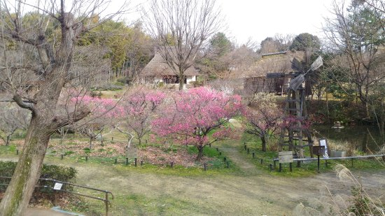 Toyonaka, Japonya: A scenic spot with some blooming trees and an old Osaka windmill.