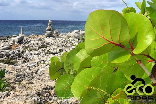 East End, Gran Caimán: Ironshore view on a beautiful day. Explore with ECO Rides Cayman