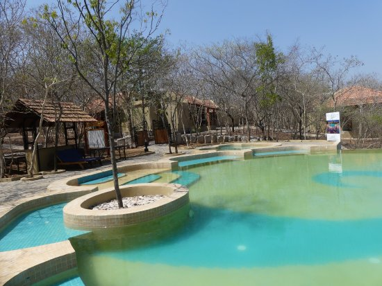 The pool was lovely well designed and great place to relax picture of the windflower resort for Resorts in bandipur with swimming pool