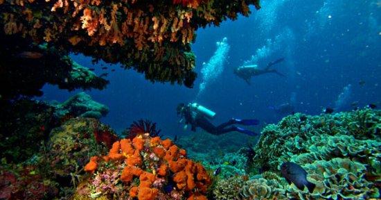 Two Fish Divers Lembongan: Great coral diving.