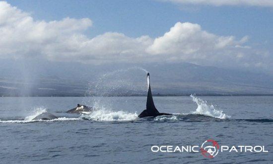 Kawaihae, HI: Whale watching experience!