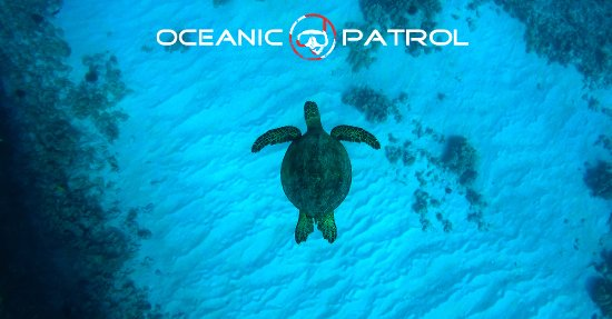 Kawaihae, HI: Oceanic Patrol!