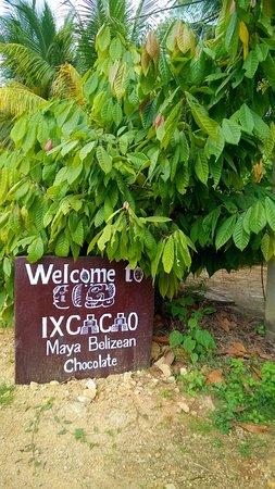 Punta Gorda, Belize: Ixcacao