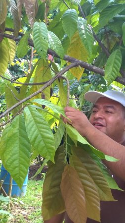 Punta Gorda, Belize: Ixcacao farm