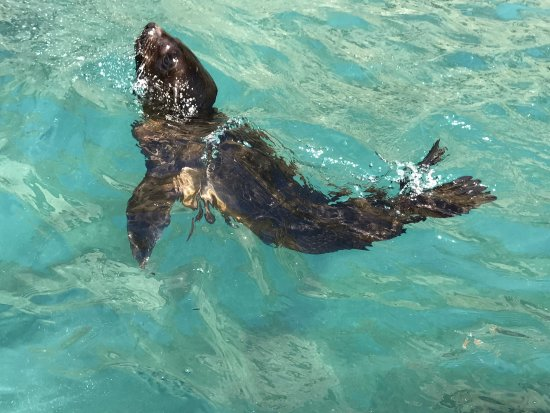 Seals by Sea Tours: photo3.jpg