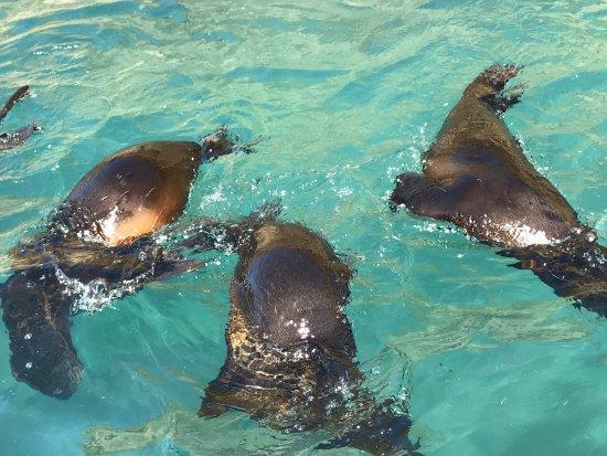 Seals by Sea Tours: photo4.jpg
