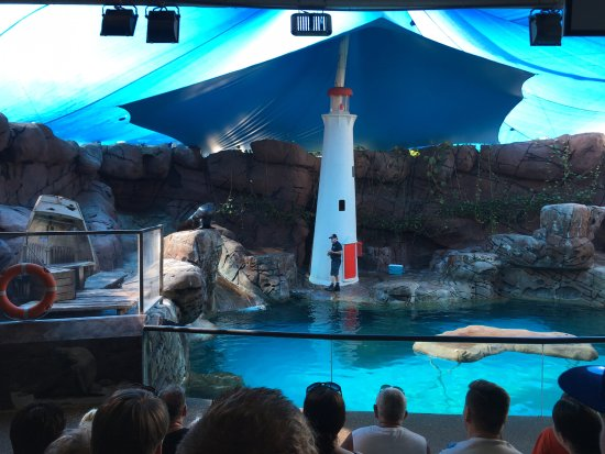 Underwater World Sea Life Mooloolaba: The Seal Show is not to be missed