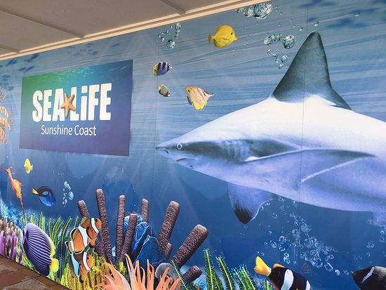 Underwater World Sea Life Mooloolaba: A great day out with family or friends of all ages