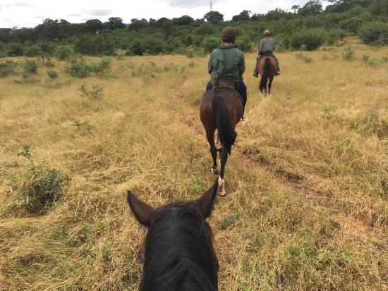 Zambesi Horse Trails - Day Tours: photo0.jpg