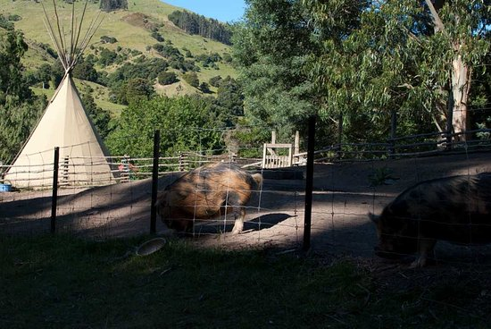Okuti Garden: just a few yards away was a tepee or glamping accommodations