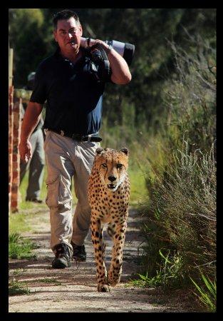 The Crags, جنوب أفريقيا: Tenikwa Cheetah Walk