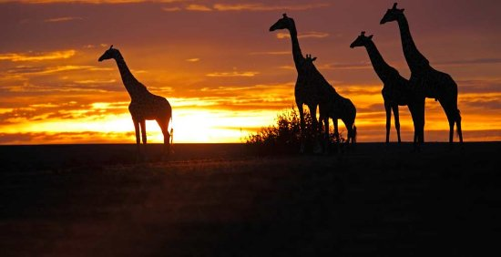 아프리카 사진