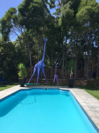 The Tarragon: Swimming pool with purple Giraffes!