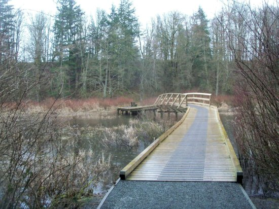 Langley City, Canada: Over the stream -- end of winter