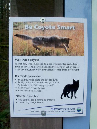 Langley City, Kanada: Keeping you informed about coyotes.  Good to see.  Gives advice.