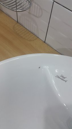 Imperial Royale Hotel: Cockroach on the bathroom sink