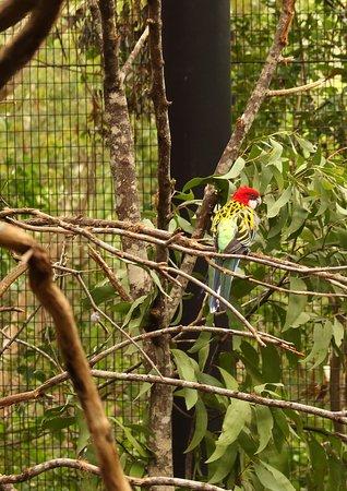 Currumbin, Australia: Birds