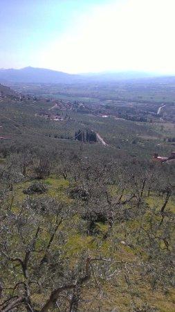 Bovara-billede